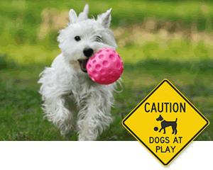 Pets at Play Signs